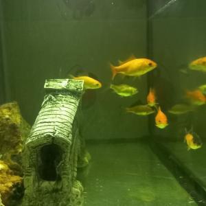 Tunis-maison_et_jardin-Aquarium-90cm-/-32cm-avec-10-poisson-et-table-fair