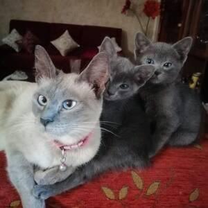 Tunis-animaux-avendre-des-chat