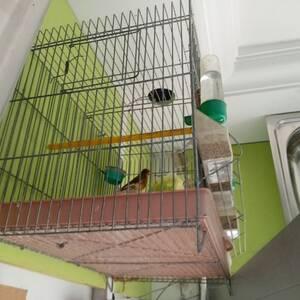 Bizerte-animaux-Oiseaux-canard