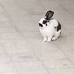 Ariana-animaux-ارانب