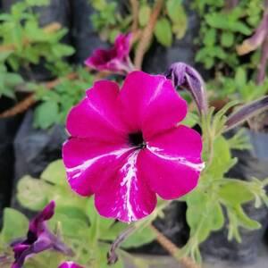Nabeul-maison_et_jardin-Plantes-et-fleurs-de-décoration