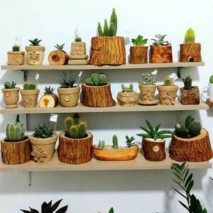 Sfax-maison_et_jardin-plantes-déco