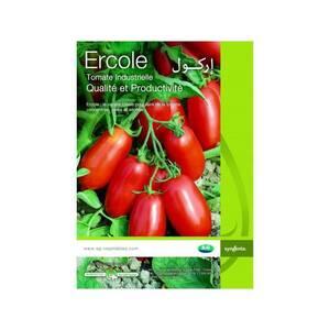 Kef-emploi_et_services-تخضير-سانية-طماطم-نوع-اركول